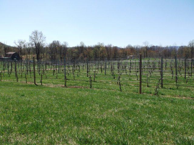 Gadino winery